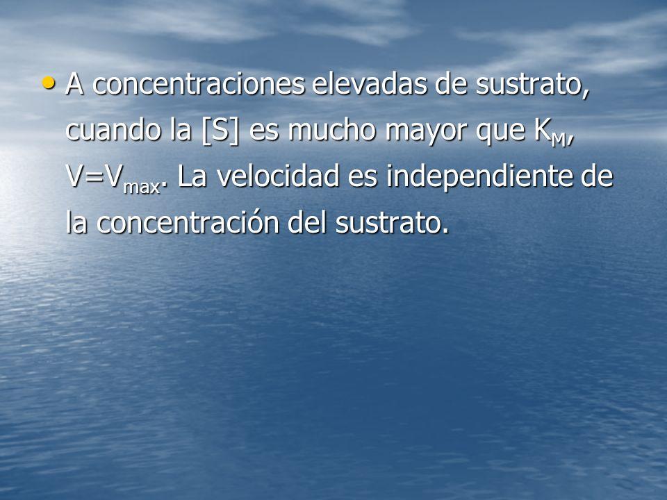 A concentraciones elevadas de sustrato, cuando la [S] es mucho mayor que KM, V=Vmax.